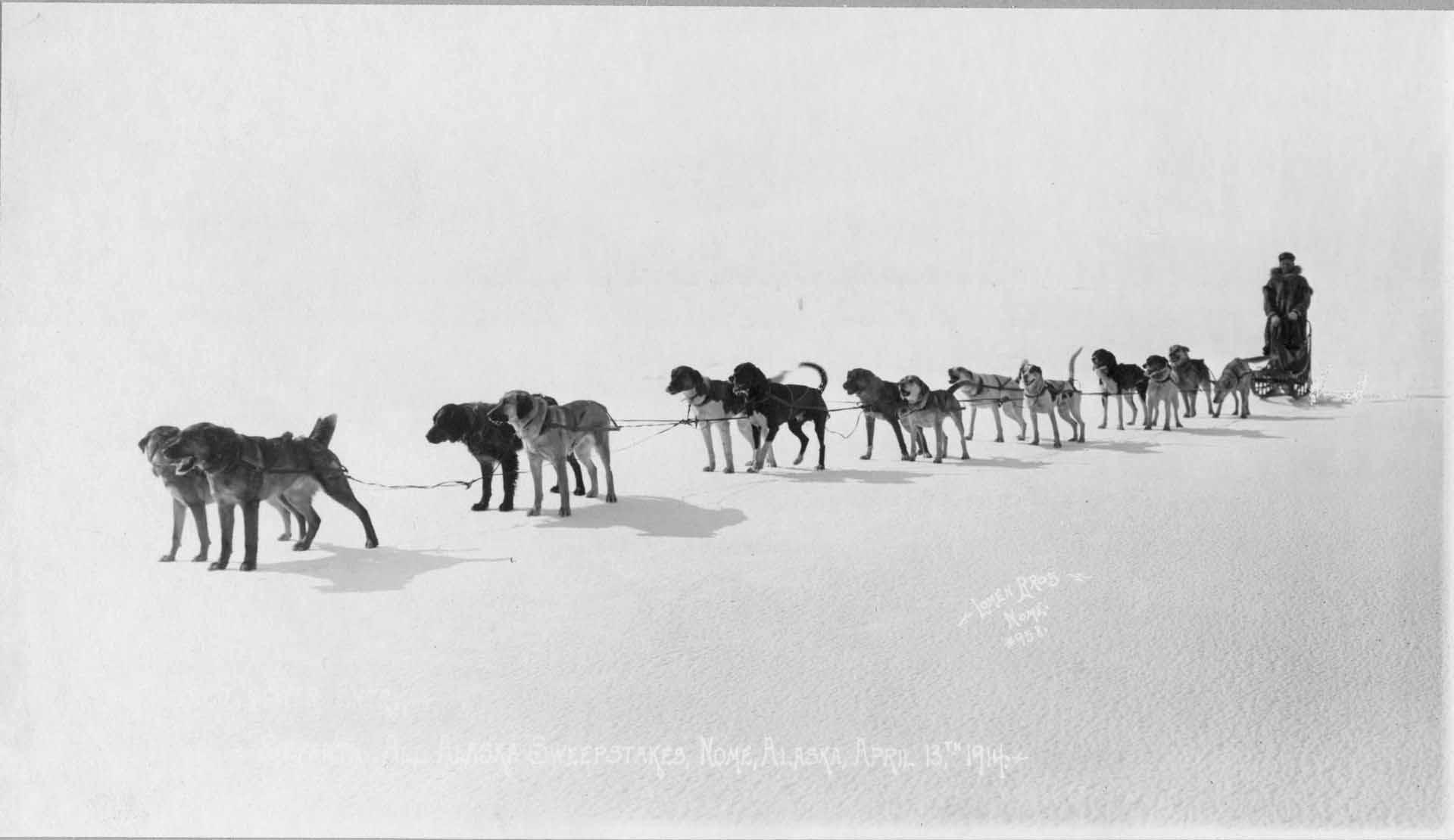 All Alaska Sweepstakes verseny bemutató cikk a Kutyafogat túra Mátrafüred